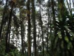 hutan-penggaron-di-susukan-ungaran_20170328_145936.jpg