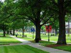 ilustrasi-kampus-hijau.jpg
