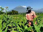 ilustrasi-petani-tembakau-temanggung.jpg