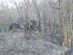 kebakaran-hutan-di-sumbing-dan-sindoro-belum-padam_20180915_001519.jpg