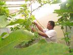 khomarudin-saat-memetik-buah-tin-di-kebun-samping-rumahnya.jpg