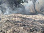 kondisi-lahan-di-lereng-gunung-lawu-yang-terbakar-minggu-20102019.jpg