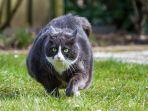 kucing_20180908_181523.jpg