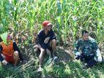 ladang-jagung-menjadi-sarana-komsos-satgas-tmmd-tegal.jpg