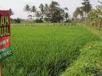 lahan-pertanian-sawah_20170322_211127.jpg