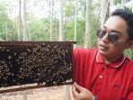 lebah-mbatang.jpg