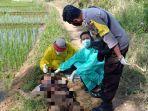 mayat-laki-laki-yang-ditemukan-di-sawah-komplek-jalan-lingkar-ajibarang.jpg