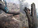 media-sosial-foto-seekor-ular-besar-seperti-anaconda.jpg