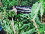 mobil-dinas-camat-petungkriyono-yang-mengalami-kecelakaan2.jpg