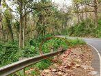 monyet-ekor-panjang-di-sepanjang-jalur-pantura-alas-roban-kabupaten-batang.jpg