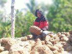 paidi-warga-desa-kepel-kecamatan-kare-kabupaten-madiun-menunjukkan-umbi-porang.jpg