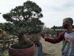 pameran-bonsai-di-halaman-rumdis.jpg