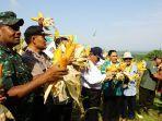 panen-raya-jagung-di-desa-jatiklampok-kecamatan-banjarejo-kabupaten-blora.jpg