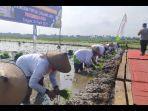 para-petani-di-desa-sidoharjo-ketika-menanam-perdana-komoditas-padi.jpg