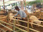 pedagang-hewan-kurban-musiman-di-jalan-soekarno-hatta-sedang-memberi-makan-hewan-ternak.jpg
