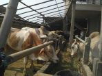 pedagang-sapi-di-desa-lanji-kecamatan-patebon_20170831_140645.jpg