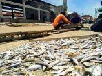 pekerja-ikan-asin-di-pantai-bandengan-kendal-sedang-menjemur-ikan-hasil-tangkapan.jpg