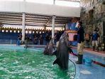 pelatih-hewan-sedang-memberikan-interuksi-kepada-lumba-lumba-untuk.jpg