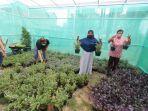 pelatihan-urban-farming-kelurahan-bambankerep-kota-semarang.jpg