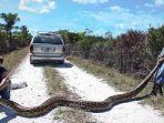pemburu-ular-di-florida-tangkap-piton-raksasa-dailymailcouk_20170701_160252.jpg