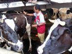 pemeriksaan-hewan-ternak-milik-peternak-di-setono-kecamatan-pekalongan-timur.jpg