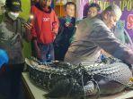 penemuan-buaya-muara-crocodylus-porosus-dengan-panjang-255-meter.jpg
