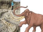 penemuan-fosil-gajah-raksasa-stegodon-di-banjarejo-grobogan-gegerkan-dunia_20170721_075335.jpg