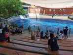 pengunjung-wisata-batang-dolphin-center-asyik-menyaksikan-pertunjukkan-lumba-lumba.jpg