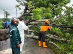 personel-bpbd-demak-mengevakuasi-pohon-tumbang-di-jebor-kecamatan-demak-kabupaten-demak.jpg