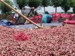 petani-bawang-merah-di-brebes.jpg