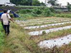petani-cabai-di-suwaktu-bandarjo-ungaran-barat-beralih-menanam.jpg