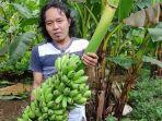 petani-pisang-banjarnegara.jpg