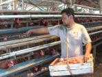 peternak-ayam-petelur-di-kecamatan-patean-kendal-sedang-mengambil-telur-dari-kandang-1.jpg
