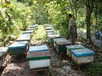 peternak-lebah-madu-di-kandangmas_20170423_173637.jpg