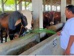 peternak-sapi-di-kabupaten-batang.jpg