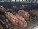 peternakan-babi-di-dusun-dalangan-desa-sumogawe-kecamatan-getasan-kabupaten-semarang_20180329_192903.jpg