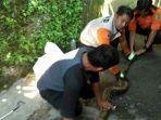 petugas-animal-rescue-bpdb-kota-sukabumi-menangkap-ular-sanca-jumat-1262020.jpg