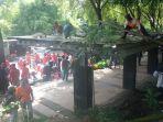 petugas-dinas-perdagangan-kota-semarang-membongkar-shelter-pkl-taman-kb_20180302_100035.jpg