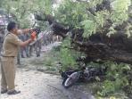 pohon-tumbang-di-jalan-dr-soetomo-tewaskan-pengendara-motor_20161010_095336.jpg
