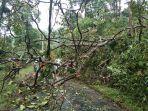 pohon-tumbang-kabupaten-pekalongan-agustus-2021.jpg