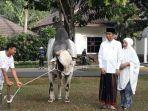 presiden-jokowi-menyerahkan-sapi-kurbannya-seusai-menjalankan-salat-idul-adha-di-lapangan-astrid.jpg