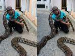 pria-asal-kebumen-pelihara-10-ular-piton-hingga-habiskan-rp-3-juta-per-bulan_20180711_112623.jpg