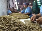 proses-memilah-biji-kopi-di-kawasan-industri-terboyo-semarang_20160811_210943.jpg