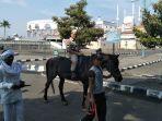 rektor-upgris-dr-muhdi-menunggangi-kuda-dari-kampus-menuju-majt_20171110_143648.jpg