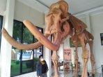 replika-gajah-purba-di-sragen.jpg
