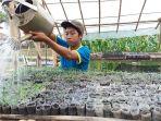 santri-merawat-tanaman-sayur-di-kebun-belakang-ponpes-rubat-mbalong-cilacap_20180522_162133.jpg