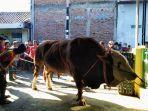 sejumlah-warga-mengelilingi-sapi-milik-muhammad-nurul-hidayat-35-warga-kampung-pan.jpg