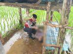 seorang-warga-tewas-tersambar-petir-di-desa-kancilan-kecamatan-kembang-kabupaten-jepara.jpg
