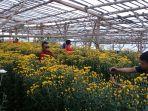 setiya-aji-flower-farm_20171225_192011.jpg