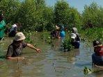 tanam-mangrove-di-ahri-pahlawan.jpg